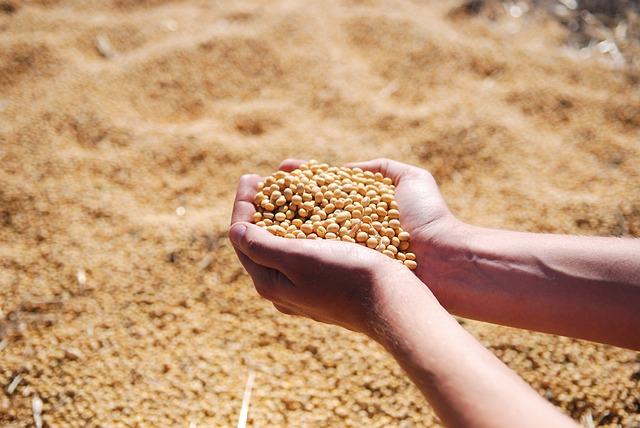 semena soji